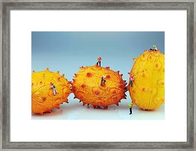 Mountain Climber On Mangosteens II Framed Print by Paul Ge