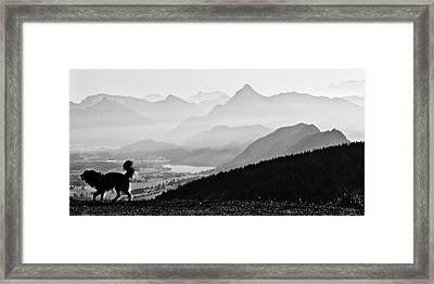 Mountain Dog Framed Print