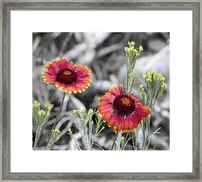 Mountain Flower 2 Framed Print by Sandra Welpman