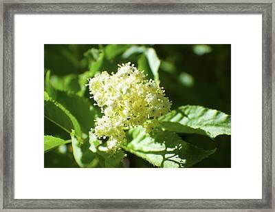 Mountain Flower Framed Print