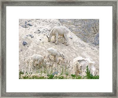Mountain Goats 1 Framed Print