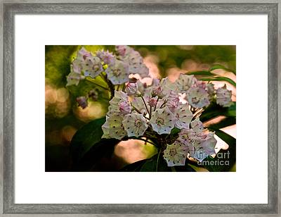 Mountain Laurel Flowers 2 Framed Print