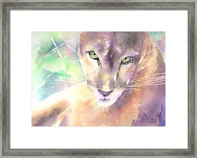 Mountain Lion Framed Print by Arline Wagner