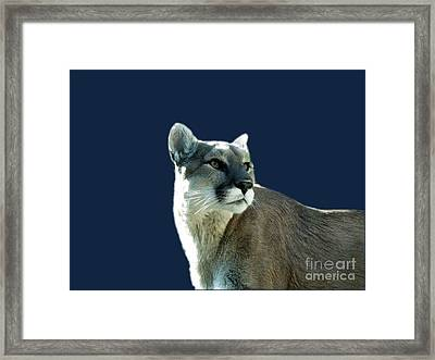 Mountain Lion Beauty Framed Print by Donna Parlow