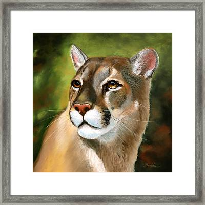 Mountain Lion Framed Print by Janet Biondi