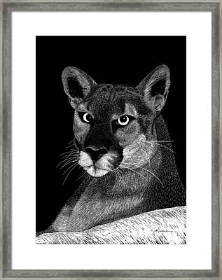 Framed Print featuring the mixed media Mountain Lion by Kume Bryant