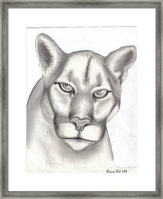 Mountain Lion Framed Print by Rick Hill