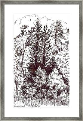 Mountain Pines And Aspen Field Sketch Framed Print by Dawn Senior-Trask