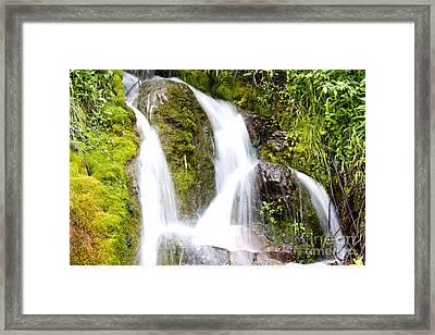 Mountain Spring 3 Framed Print by Janie Johnson