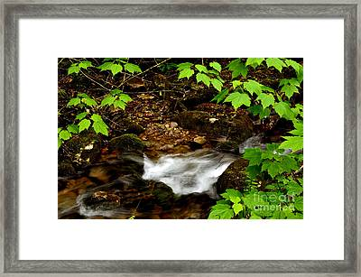 Mountain Stream In Spring Framed Print by Thomas R Fletcher