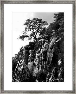 Mountain Tree Framed Print