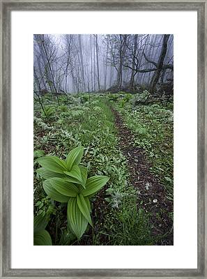 Mountains To Sea Trail Framed Print by Rob Travis