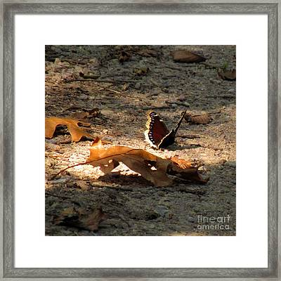 Mourning Cloak Framed Print by Marilyn Smith