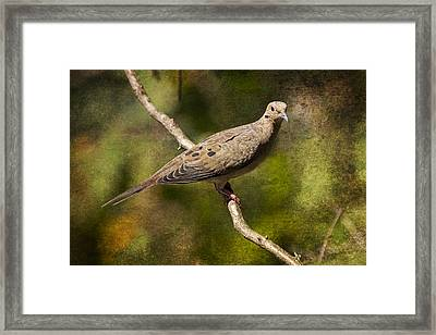 Mourning Dove On A Branch Framed Print by Randall Nyhof