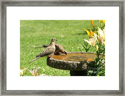 Framed Print featuring the photograph Mourning Doves by Jack R Brock