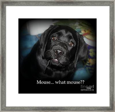 Mouse---what Mouse Framed Print