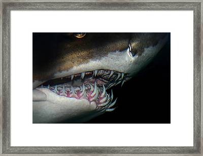 Mouthy Framed Print