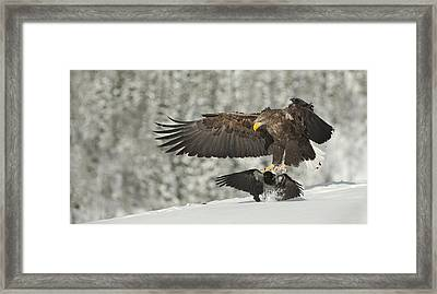 Move It Sunshine Framed Print by Andy Astbury