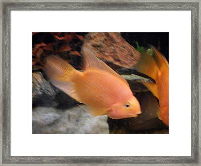Move Over Framed Print by Val Oconnor