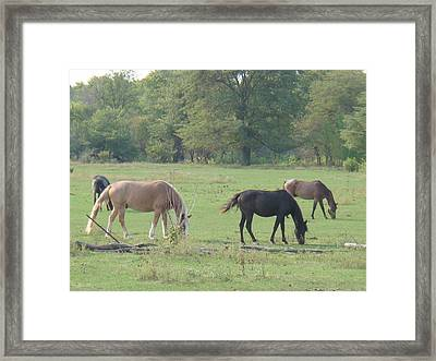 Framed Print featuring the photograph Mowing The Lawn by Bonfire Photography