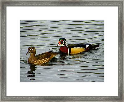 Mr And Mrs Wood Duck Framed Print by Judy Wanamaker