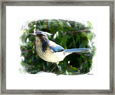 Mr Blue Framed Print by Brian D Meredith