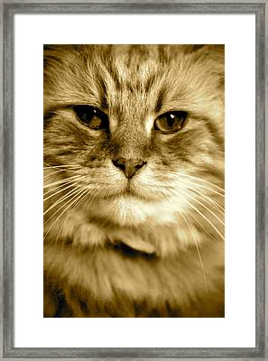 Mr Buzz If You Don't Mind Framed Print