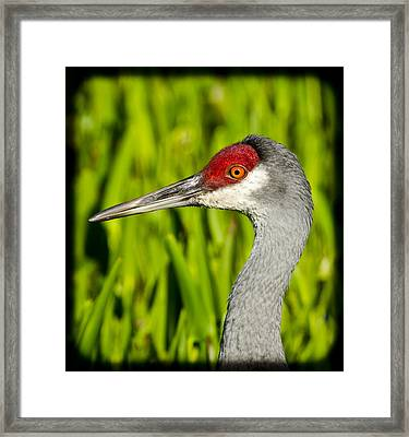 Mr Crane Framed Print