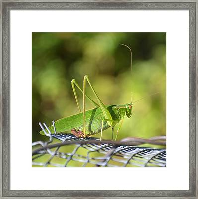 Framed Print featuring the photograph Mr Grasshopper by Mary Zeman