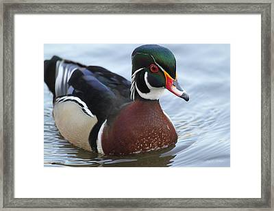 Mr. Handsome  Framed Print