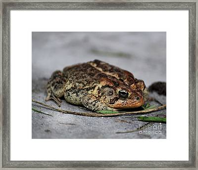 Mr Toad Framed Print