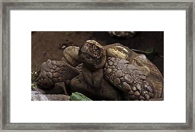 Mr. Tortoise Framed Print by Dorothy Hilde