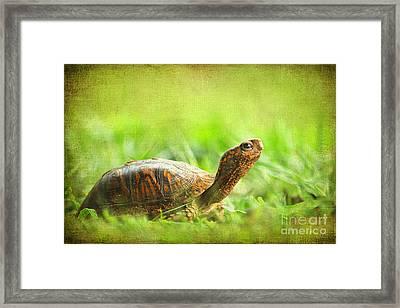 Mr Turtle Framed Print