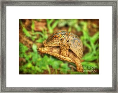 Mr Turtle II Framed Print
