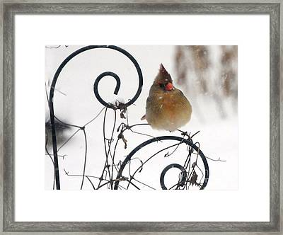 Mrs. Cardinal Framed Print by Tamera James