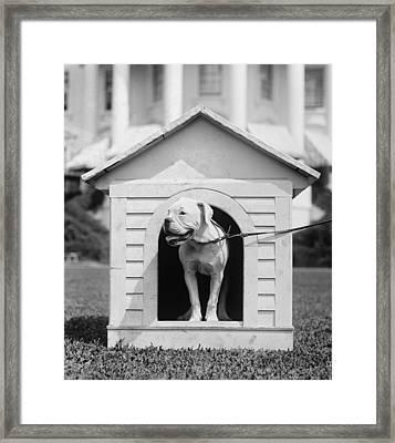 Mrs. Hardings Dog Oboy In A Doghouse Framed Print