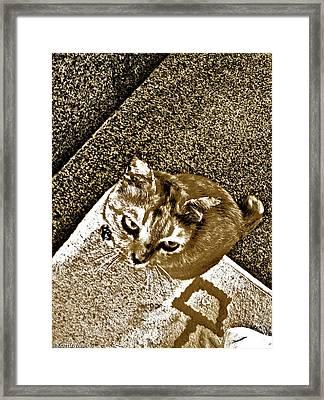 Ms Gato In Sepia Framed Print