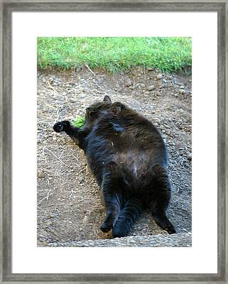 Ms.black On Back Framed Print
