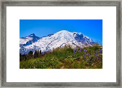 Mt Rainier Meadow With Lupine Framed Print by David Patterson