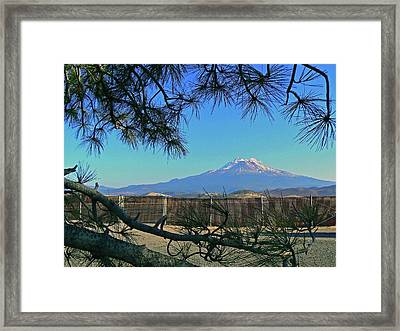 Mt Shasta At Weed  Framed Print by Pamela Patch