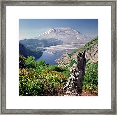 Mt. St. Helens Framed Print by Danielle D. Hughson