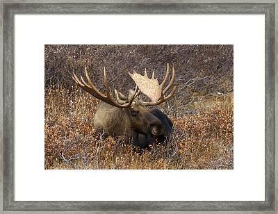Framed Print featuring the photograph Much Needed Rest by Doug Lloyd