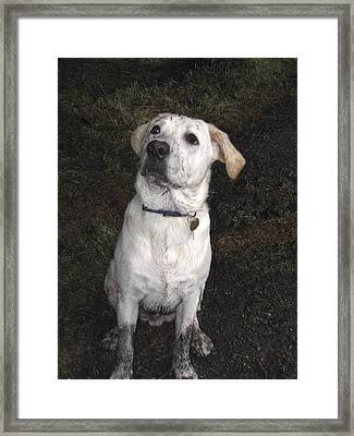 Mucky Pup Framed Print by Fiona Messenger