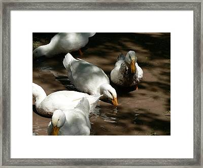 Muddy Ducks Framed Print