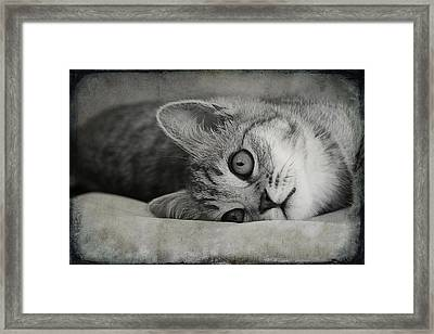 Muffin Framed Print by Claudia Moeckel