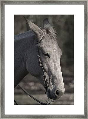 Mule And Tack Litho Framed Print by Kathy Clark