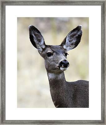 Framed Print featuring the photograph Mule Deer Doe by Steve McKinzie
