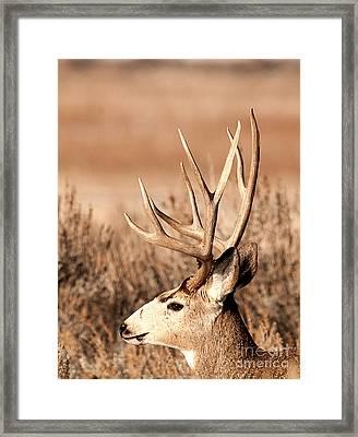 Mule Deer Framed Print by Earl Nelson
