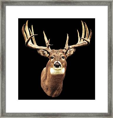 Mule Deer Head Framed Print