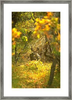 Mule Deer  Framed Print by Tony Marinella